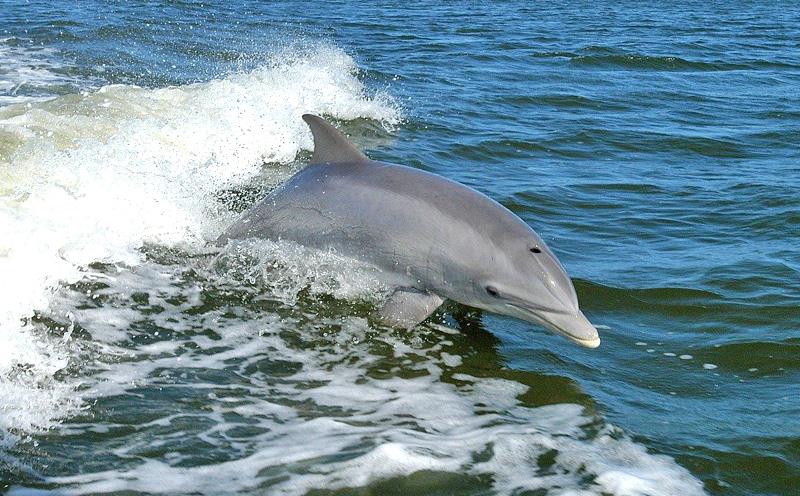 Dolphin Cruise in Orange Beach